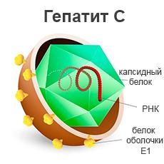 Лечение гепатита C